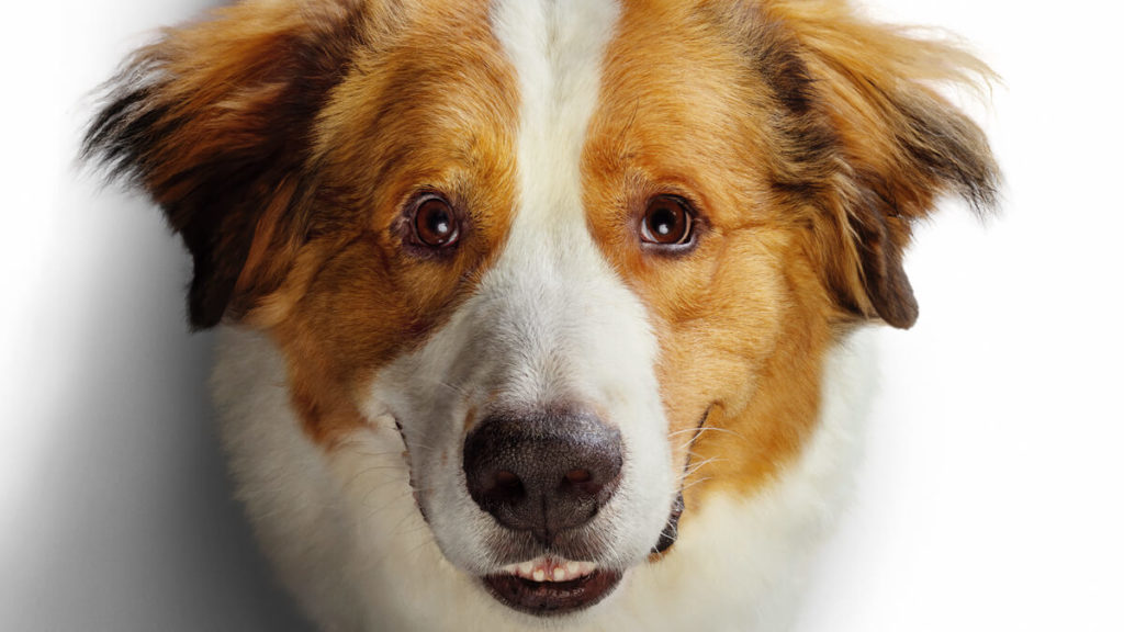 A Dog's Journey Movie Review